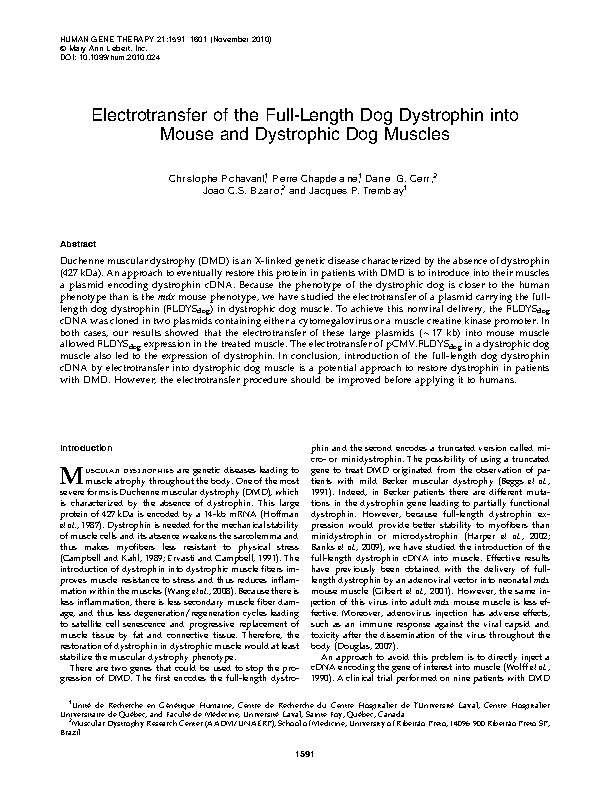 Electrotransfer of the Full-Length Dog Dystrophin into Mouse and Dystrophic Dog Muscles